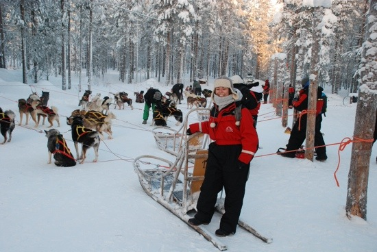 Husky Safari in Lapponia