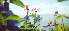 Capri, l'isola blu